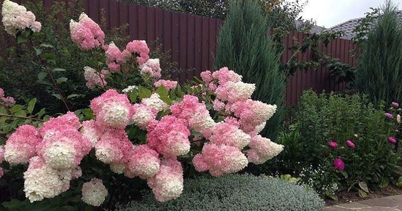 ТОП-10 самых красивых кустарников для вашего сада