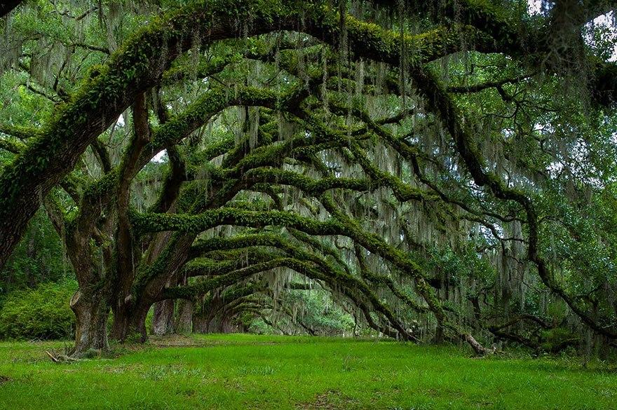 Дубовая аллея в Южной Каролине, США