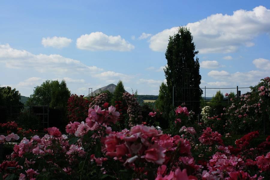 Розарий в Зангерхаузене, Германия