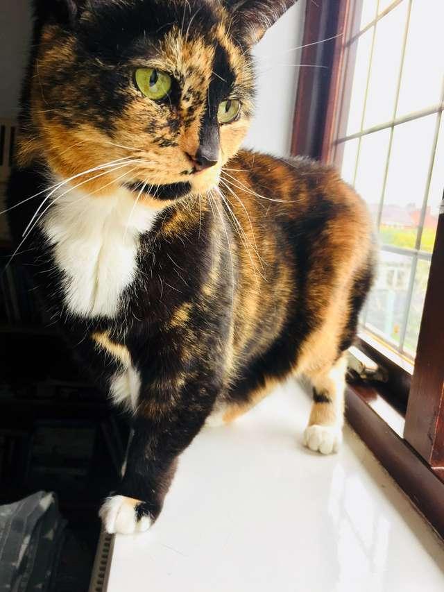 200 дней одиночества! Брошенная 8-летняя кошка оказалась в приюте, и до сих пор ждет чуда…