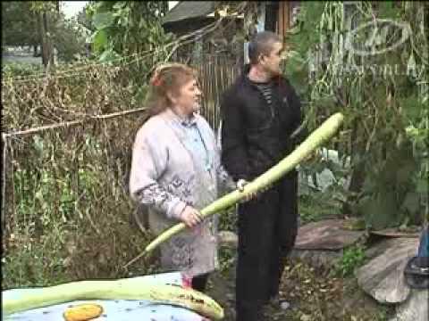 Супер огурец вырос в Беларуси )