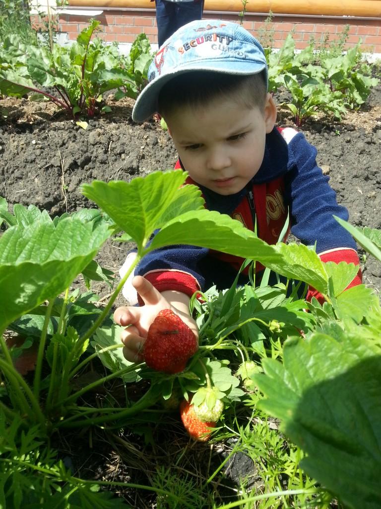 Собираем урожай.
