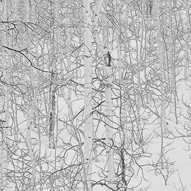Дерево-лес зимой...