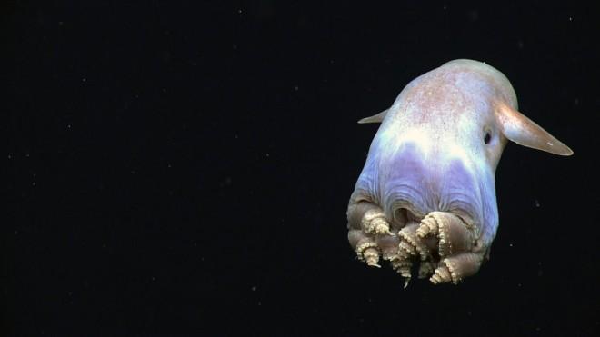 Ужасные обитатели морских глубин впервые в истории попались на глаза биологам
