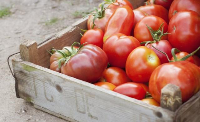Как правильно дозарить и хранить томаты