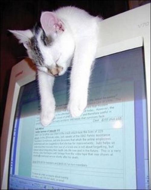 Как спят коты: 25 любимых поз