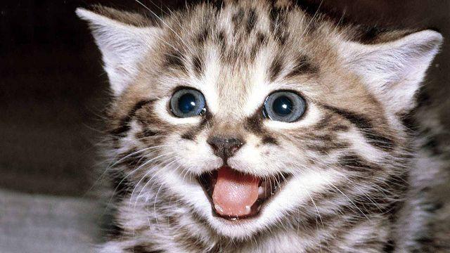 Картинки по запросу котенок