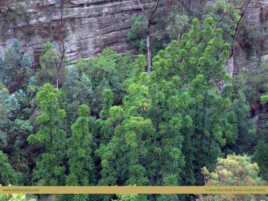 forests28 Леса с другой планеты!