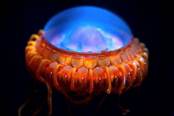 Морские существа, похожие на инопланетные формы жизни существа, море, инопланетяне, рыбы