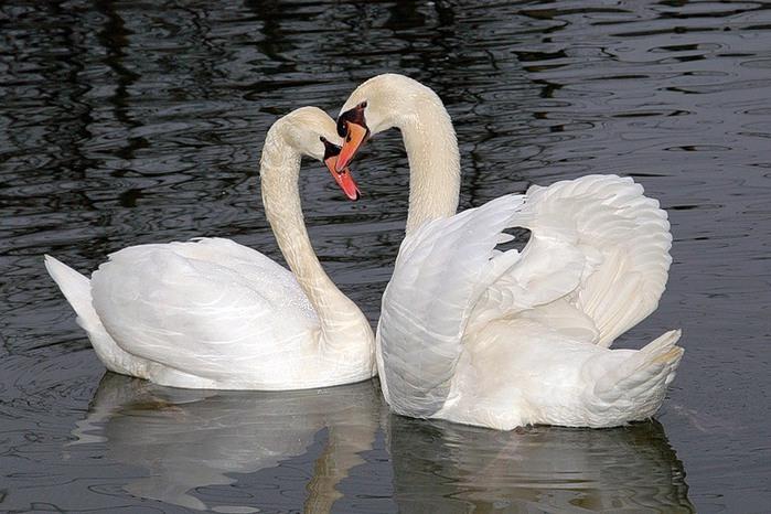 Любите и будьте Любимы..