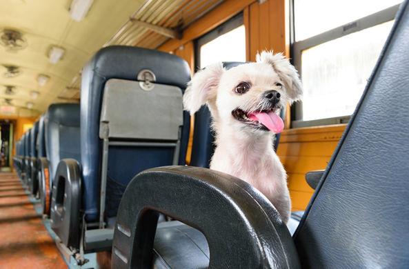 Домашние животные могут ездить в поездах без хозяев