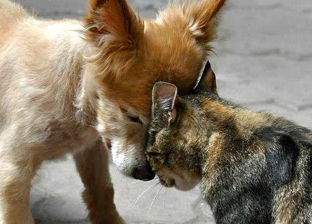 Кошки и собаки: кто умнее?