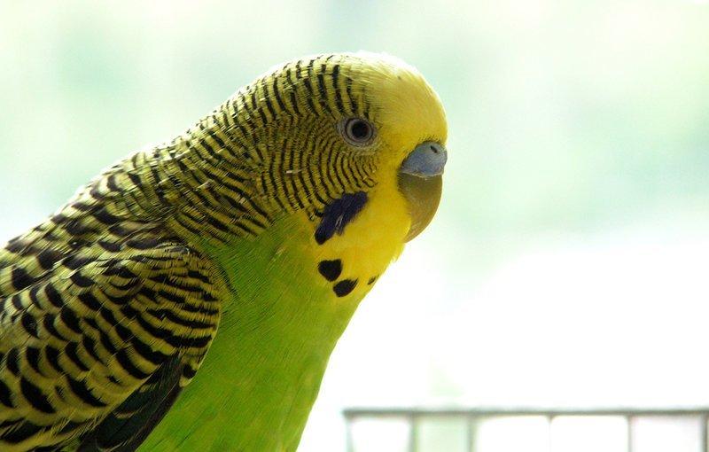 Птичку жалко жизнь, истории, попугай, черный юмор