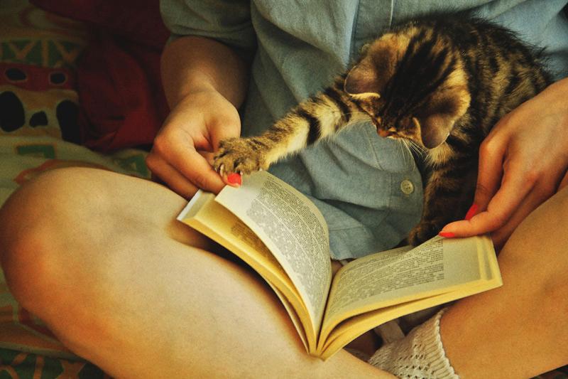 cat-duties