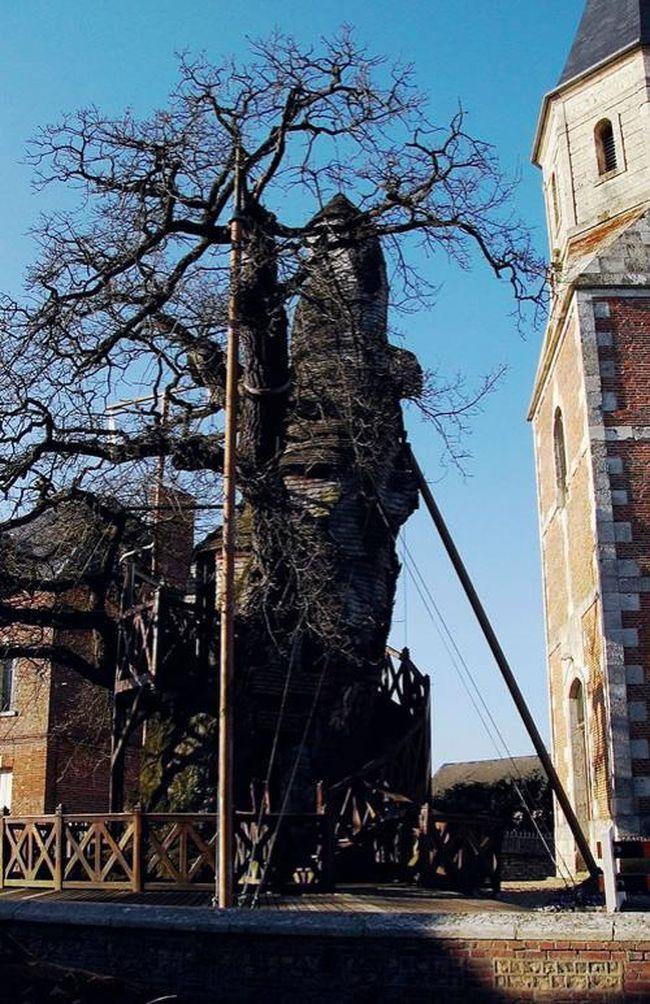 А это дуб-церковь в Голландии...
