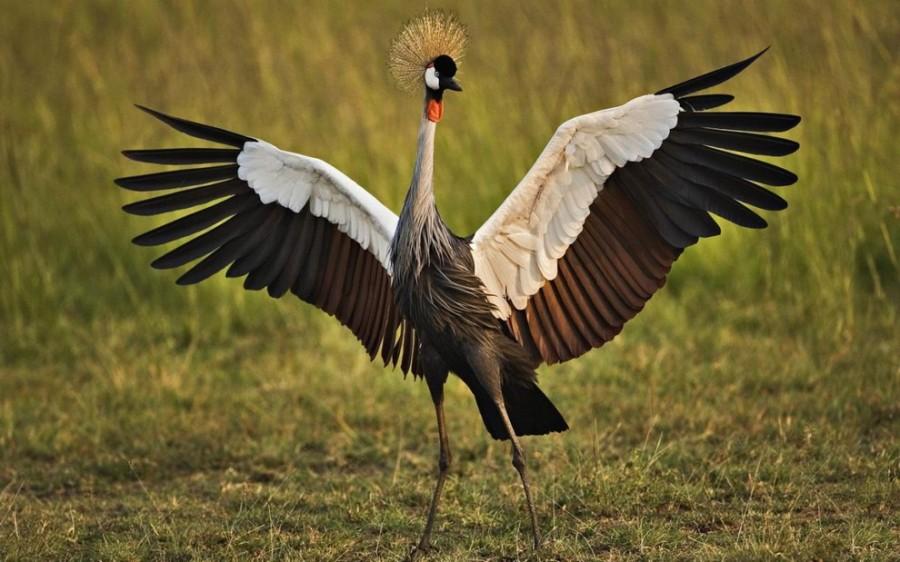 birdie04 Топ 10 самых красивых птиц в мире