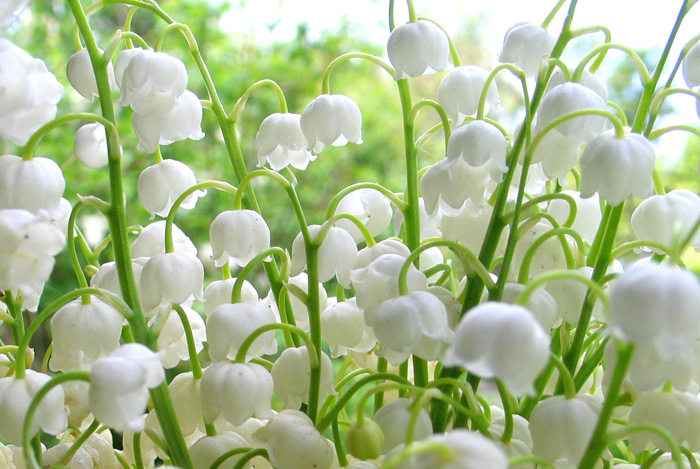 Блог.ру - xishnitsa - Цветы.