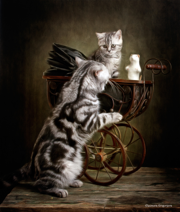Колыбельная для маленькой кошки. / Фото: Элеонора Григорьева.