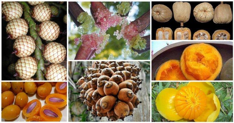 20 съедобных плодов, о которых вы даже не слышали