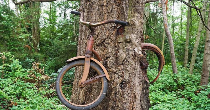 Что скрывает легенда вросшего в дерево велосипеда