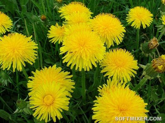 Растения, которые предсказывают погоду