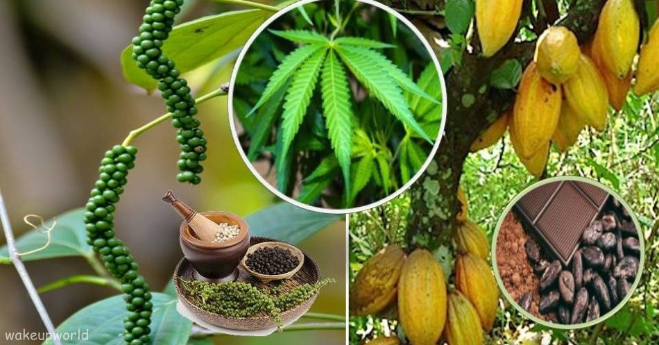 6 растений кроме конопли, в …