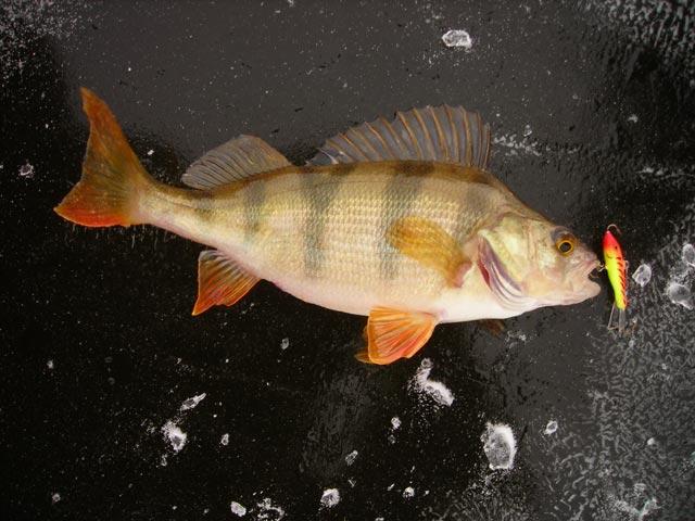 рыбачьей удалью блесну и в речке возле леса поймаю щуку на блесну
