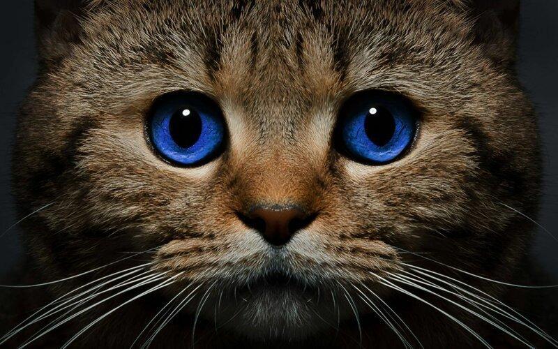 Почему дома нужен котик (14 фото)