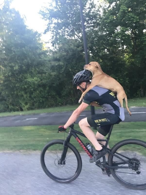 Велосипедисты нашли щенка со…