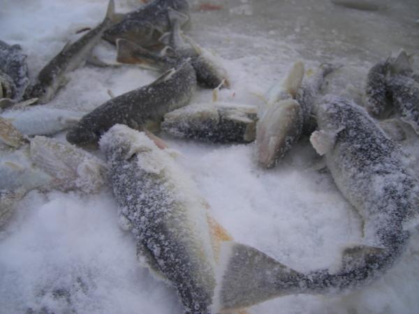 Открываем зимний сезон, рыбалка на Белом море