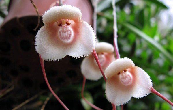 Поразительные растения, в существование которых сложно поверить!