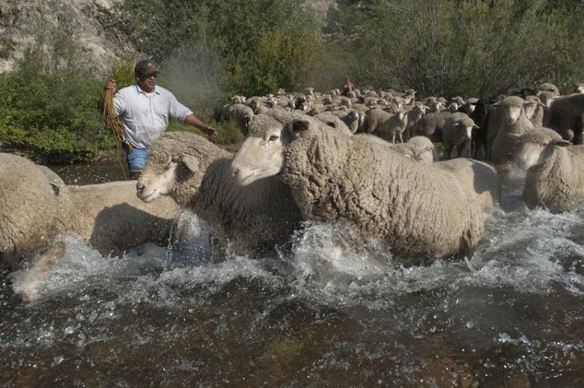 terraoko 2015012702 3 Праздник Трейлинг овец в Айдахо.