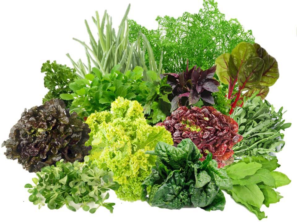 """Результат пошуку зображень за запитом """"Зелені листові овочі png"""""""