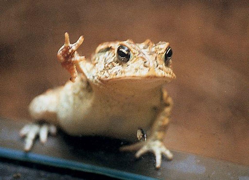 Вот и дождались: жаба Тоби — восходящая звезда интернета