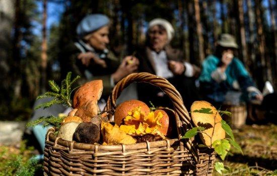 Почему нельзя собирать грибы в високосный год и что такое «ведьмин круг»? Приметы и заветные слова во время сбора грибов