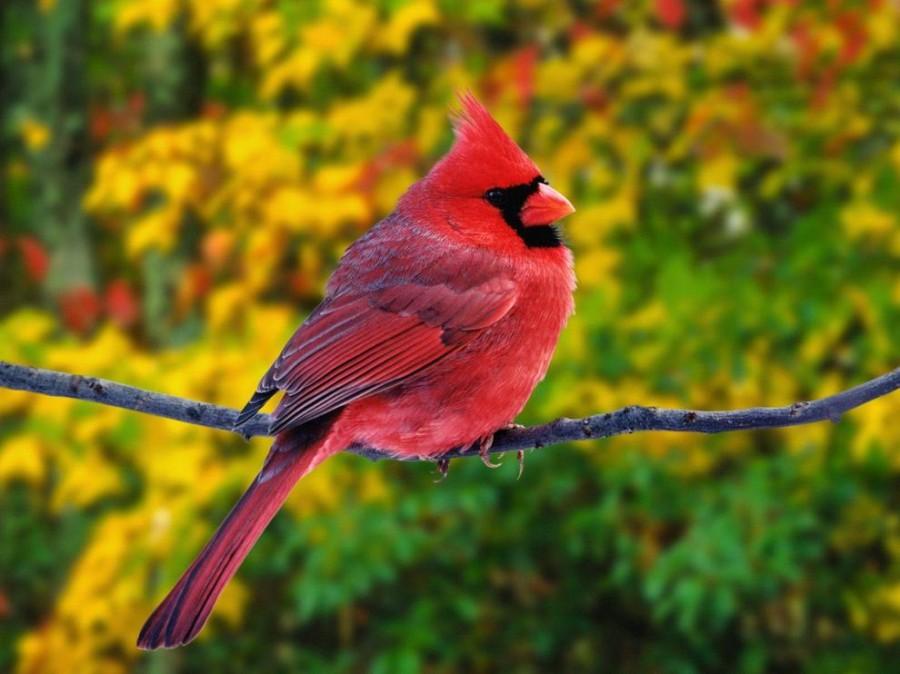 birdie05 Топ 10 самых красивых птиц в мире