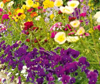 Идеи для сада наполнят его свежей энергией.