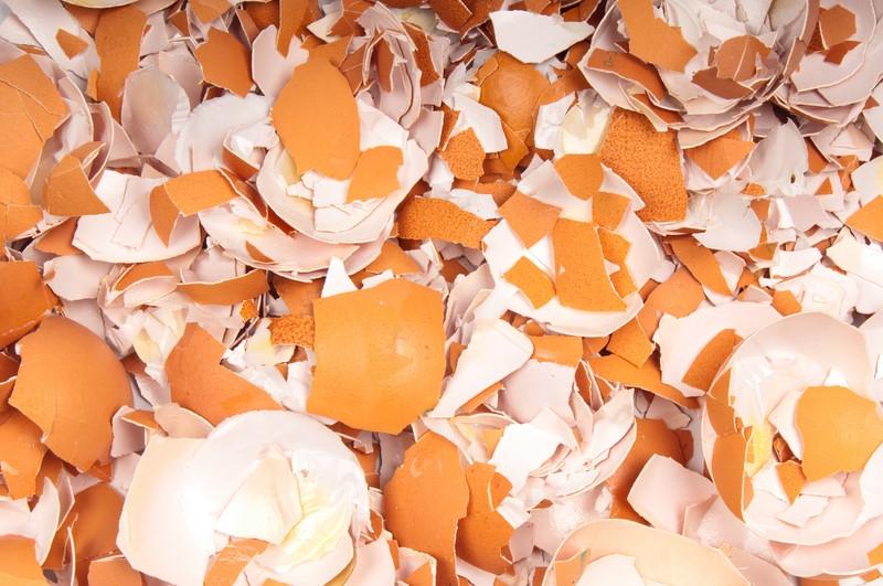 яичная скорлупа в садоводстве