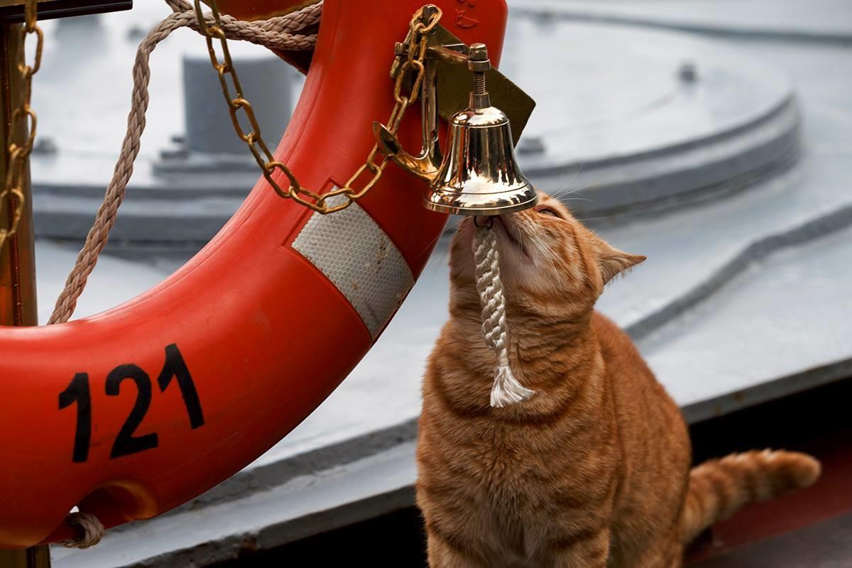 Минобороны России показало первого кота, принявшего участие в походе ВМФ к Сирии