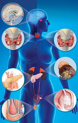 Эндокринология или когда проблемы со здоровьем вызваны гормональными нарушениями