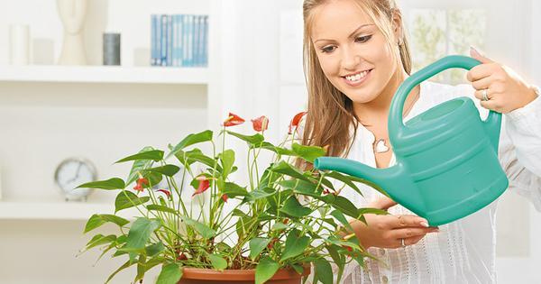 Это средство отлично реанимирует и оживит даже самые чахлые домашние растения!