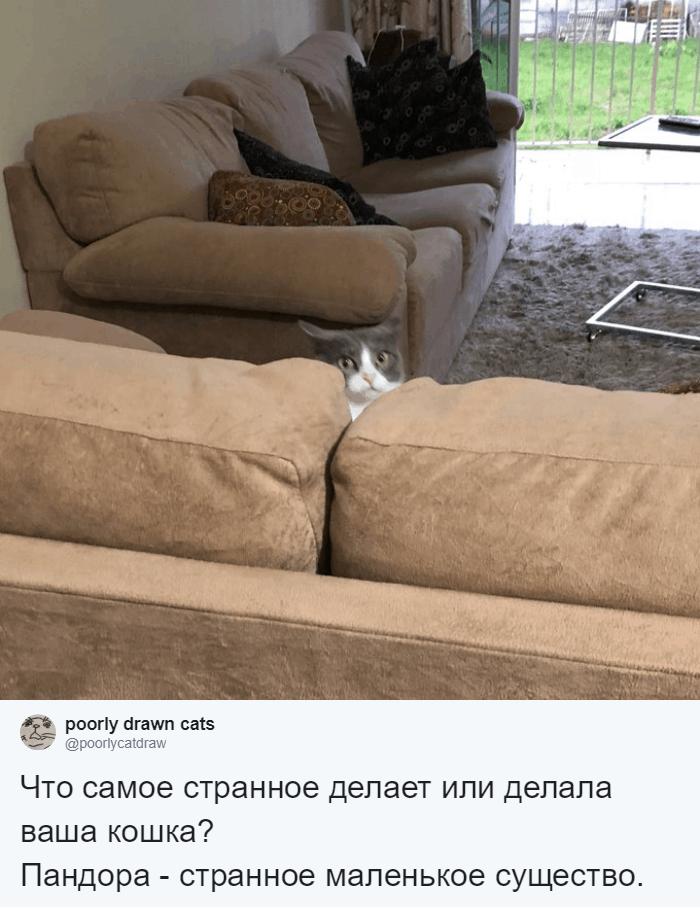 Любуется на себя в зеркале и думает, что он рыба: люди рассказали о странных занятиях своих котов