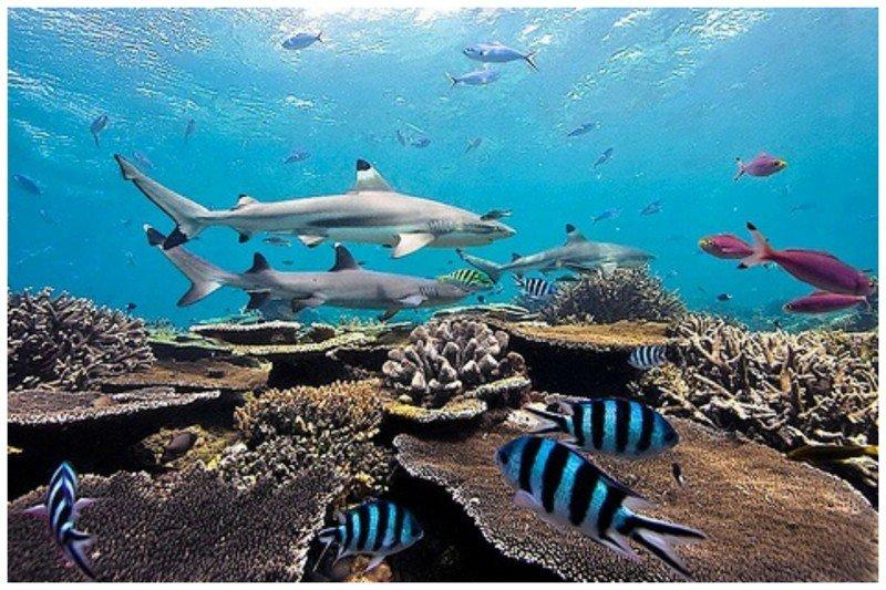 На острове, периодически сменяя друг друга, находятся смотрители, которые отвечают за чистоту острова, следят за животными, растениями и туристами, которых пускают по специальным пропускам жизнь, земля, интересное, необитаемые острова, факты