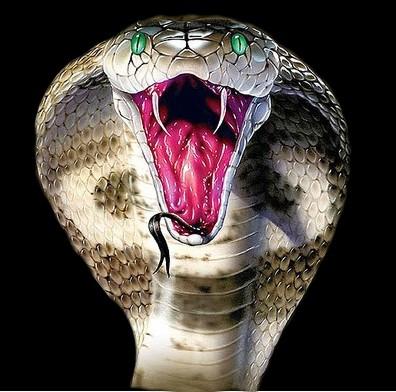 Самые опасные змеи в мире