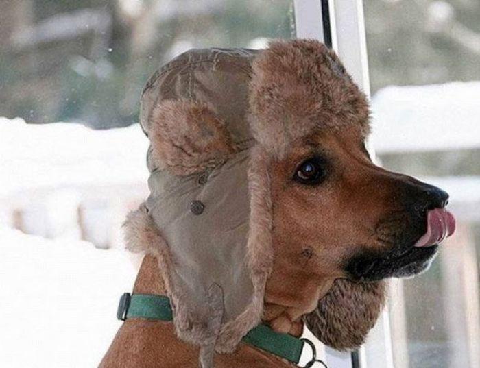 смешное фото зима