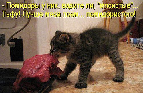 Кулинарные котоматрицы 10