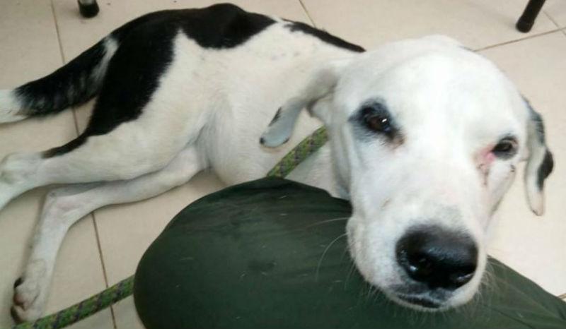 Хозяин оставил собаку в аэропорту, и она умерла из-за «разбитого сердца»