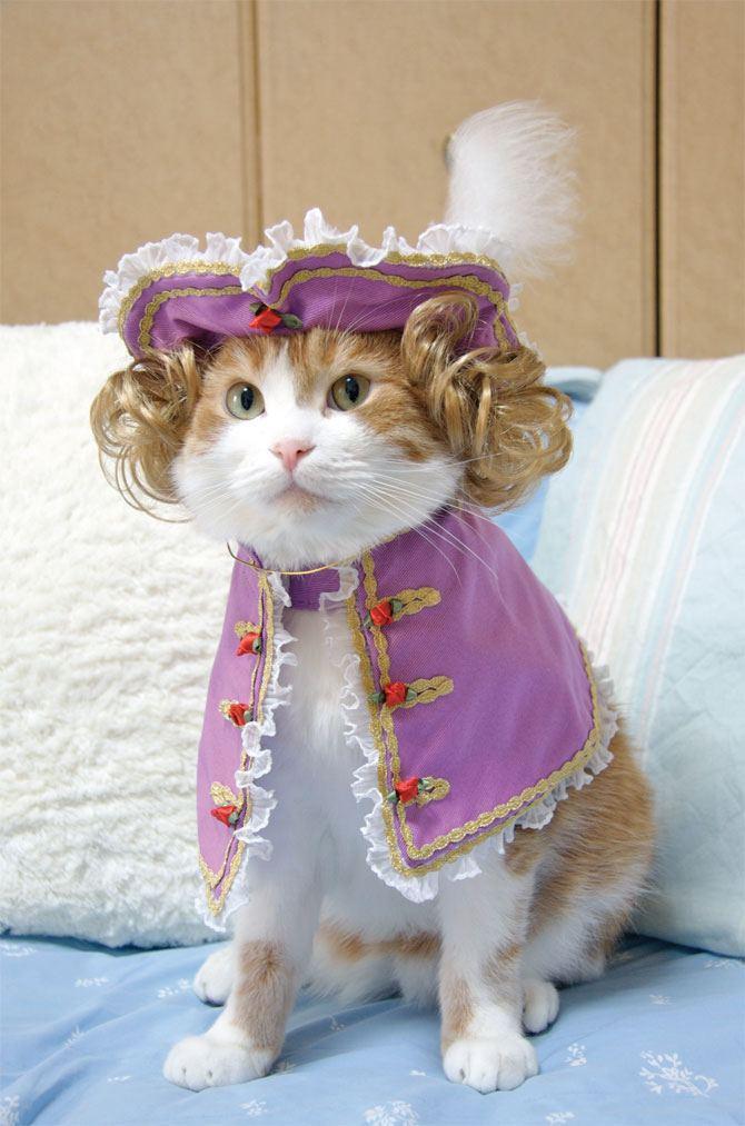 это фото кошек в одежде наша