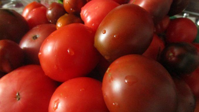 Знакомьтесь: синьор помидор!…
