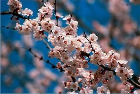 Весна в Ташкенте